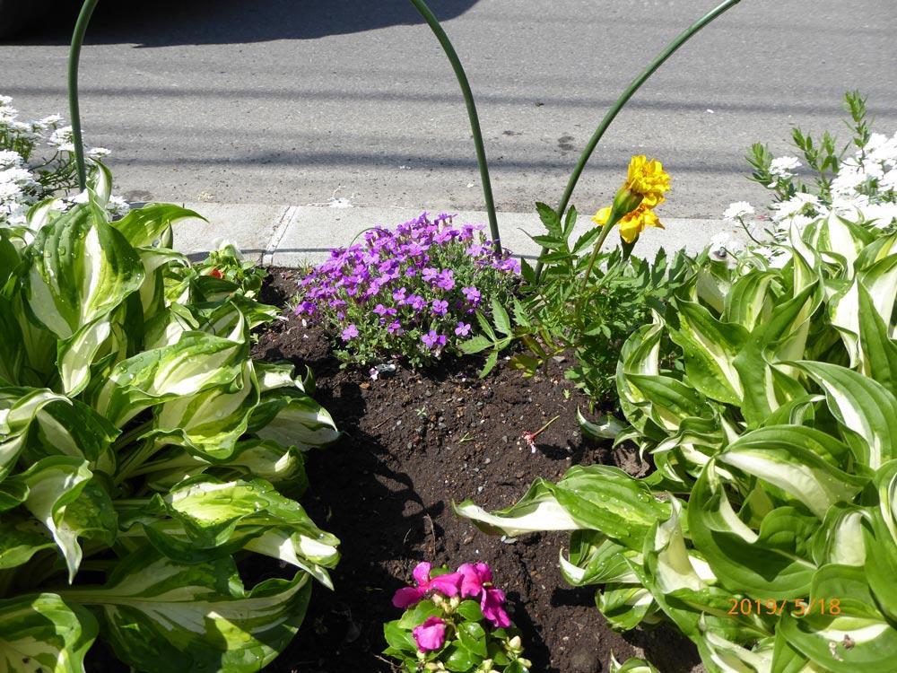 2019.5.18 春の町内会の花植え