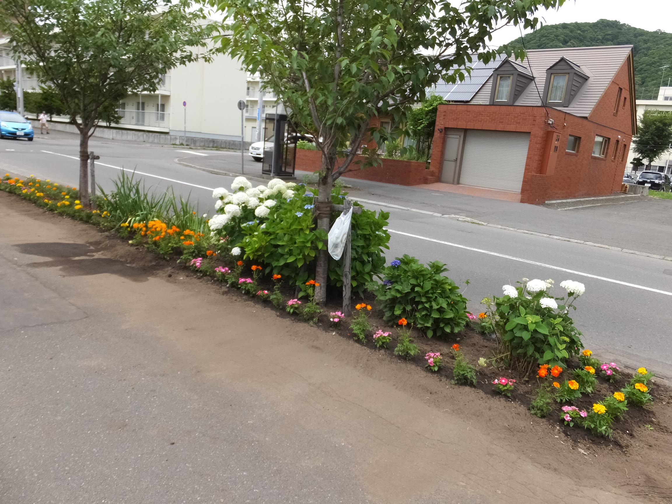 2020.7.25 町内会花植え